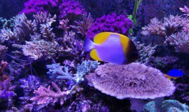 Coralli per acquari